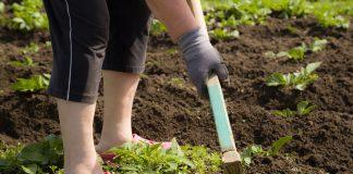 Jarná príprava záhrady na sadenie